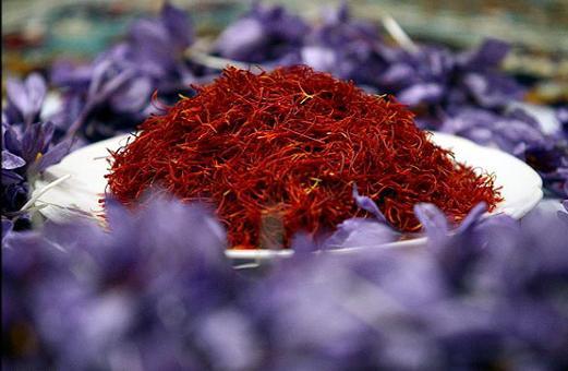 برای نخستین بار در جهان دستگاه فرآوری(پرکنی و خشک کنی) مکانیزه گل زعفران در مشهد رونمایی شد