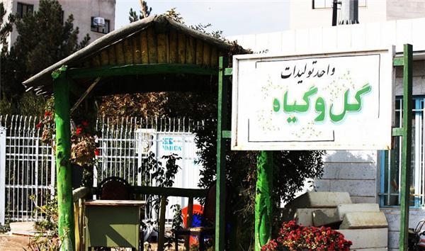 تولید یکصدهزار بوته گل در گلخانه شهرداری گناباد