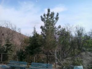 اردوگاه شهید مهاجرانی کاخک (14)