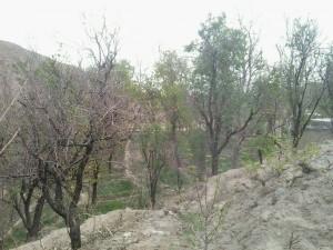 اردوگاه شهید مهاجرانی کاخک (7)