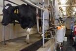 نوید رونق دامداری گناباد با افزایش حجم خرید شیر همزمان با هفته دولت