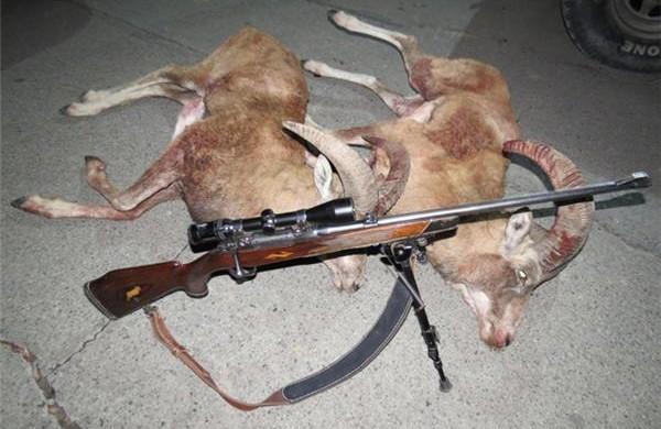 دستگیری شکارچی متخلف در گناباد