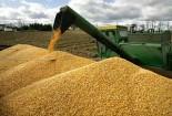 پیشبینی برداشت هشت هزار تن محصول جو در گناباد
