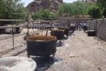 برگزاری مراسم بلغورپزان در روستای سنو گناباد