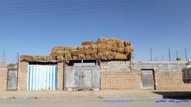 روستای حاجی آباد (4)