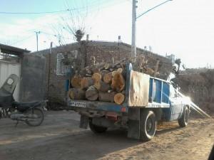 قطع درختان در گناباد (3)