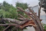 طوفان یک میلیارد ریال به فضای سبز شهری  خسارت زد + تصاویر